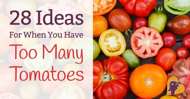 28 Things To Do With Too Many Tomatoes