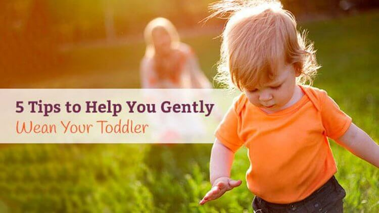 Weaning toddler. Not always an easy thing to do! Here are 5 tips that helped me wean my toddler gently and without too much drama.