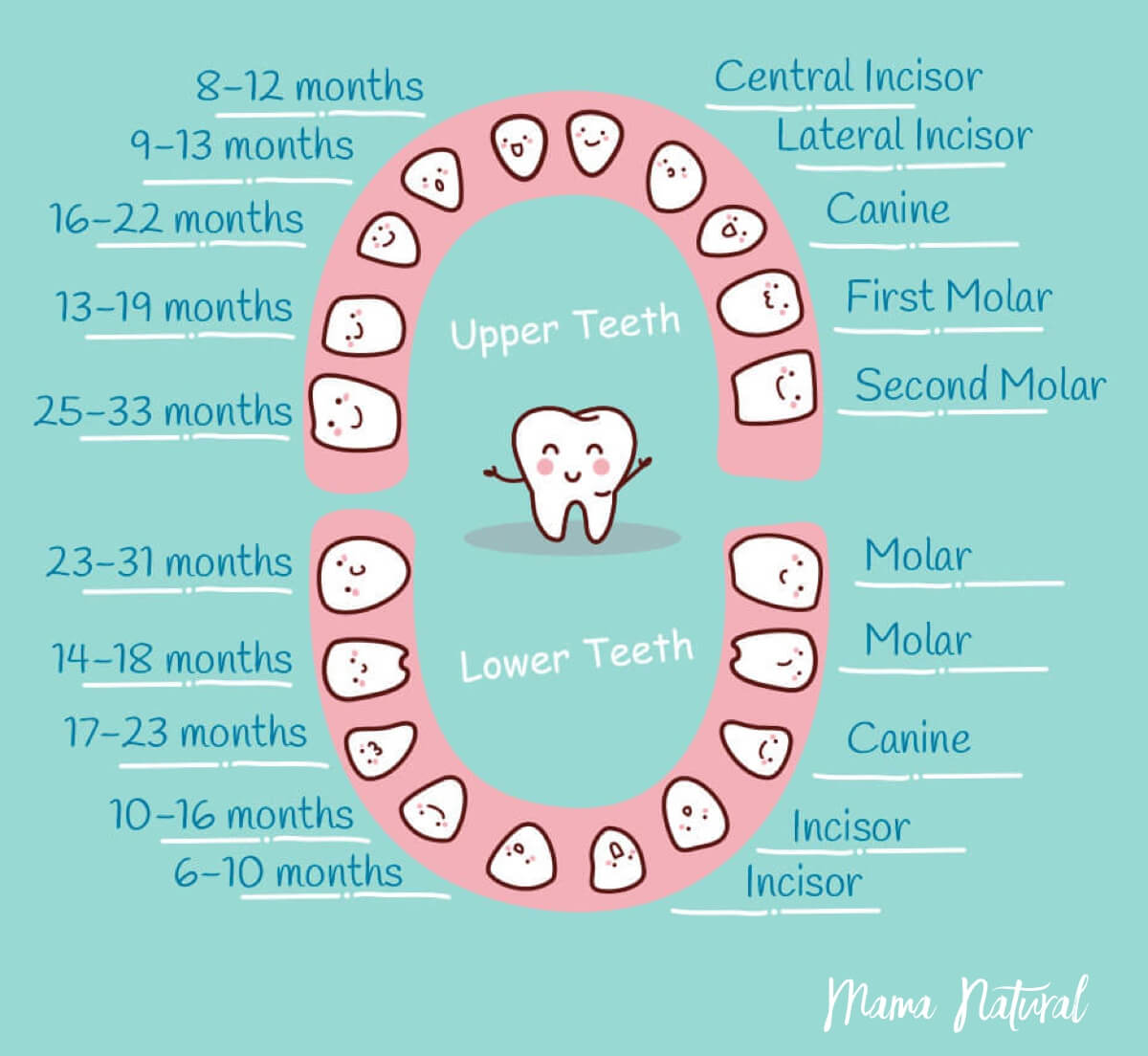 Baby Teeth Chart What Order Do They Come In chart by Mama Natural