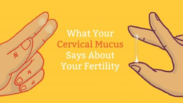 Cervical Mucus Chart: Know When You're Fertile | Mama Natural