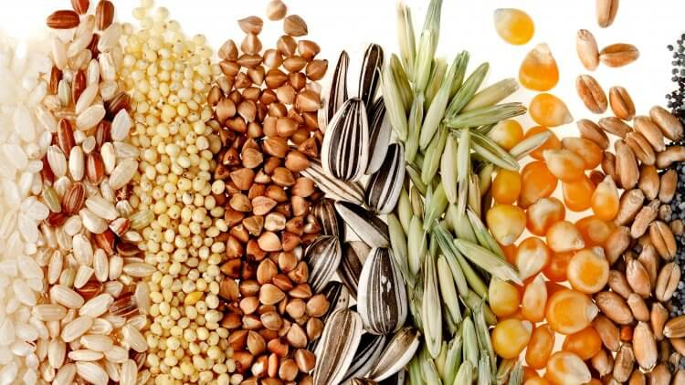 Healthy Whole Grains (Change Your Diet, Change Your Life. Part 4)
