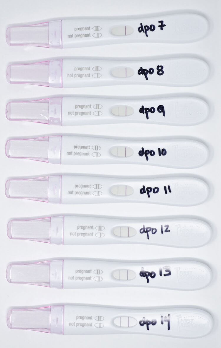 Can A Negative Pregnancy Test Be Wrong Mama Natural