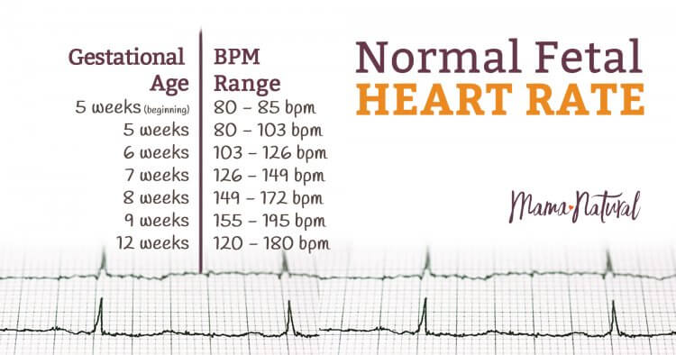 Normal Fetal Heart Rate: Is Your Baby on Track? | Mama Natural