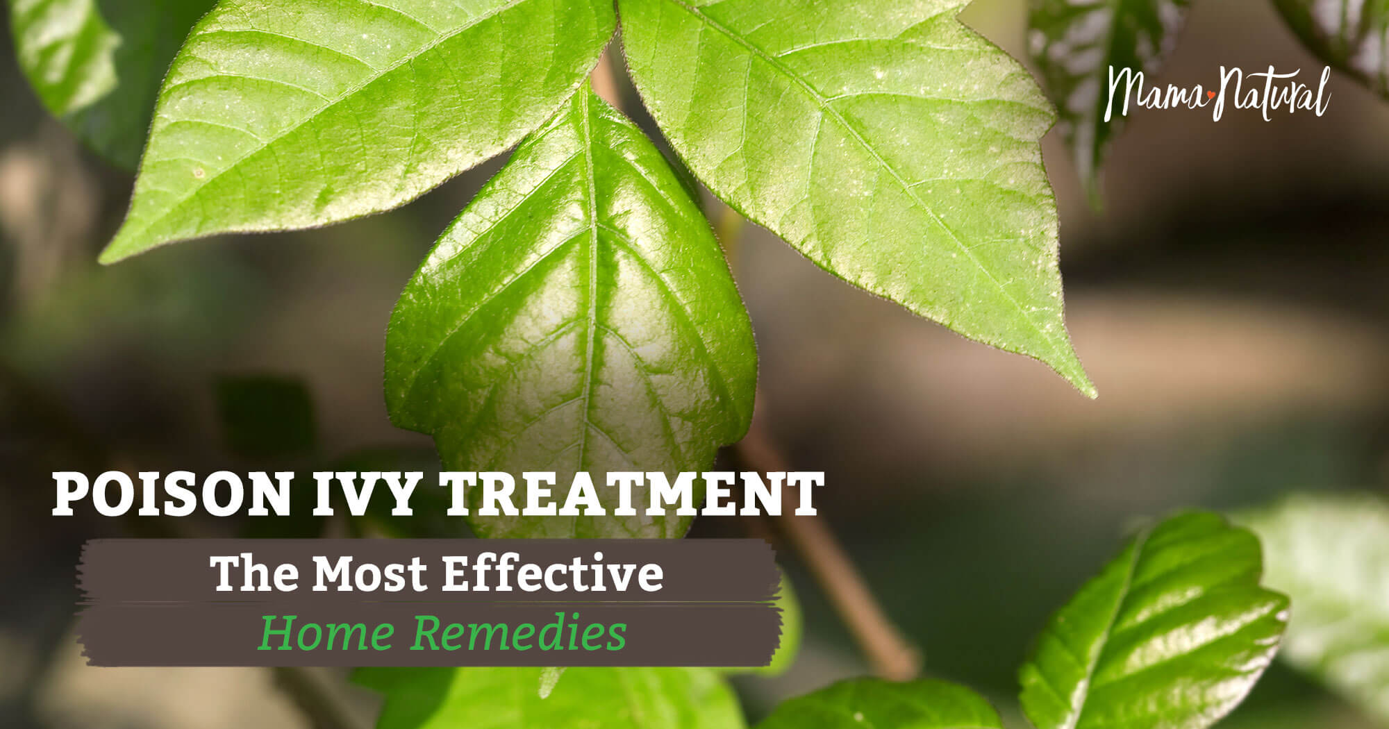 Poison Ivy Treatment All Natural Home Remedies Mama Natural
