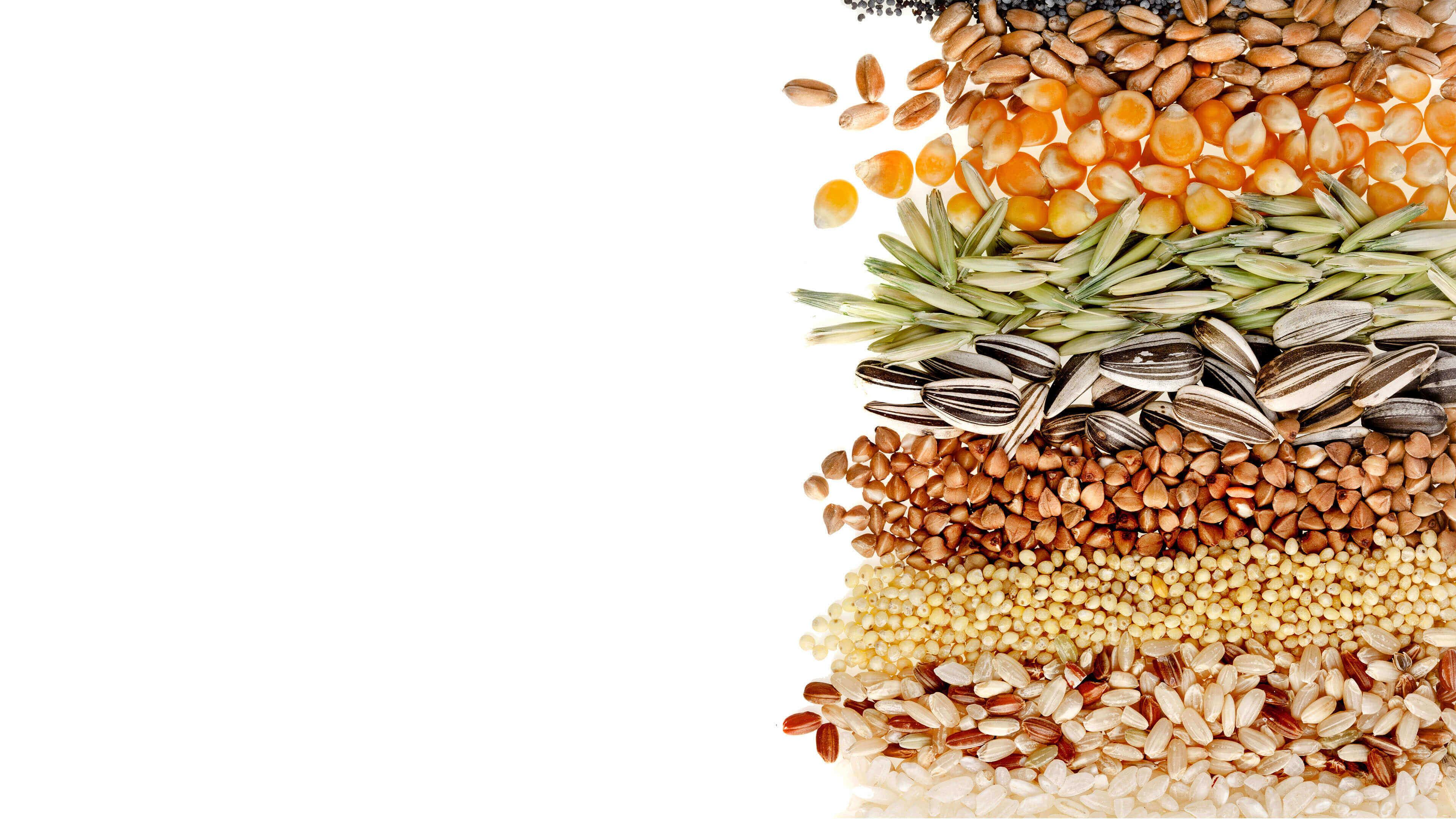 What Are Gluten Grains What Are Gluten Grains new foto