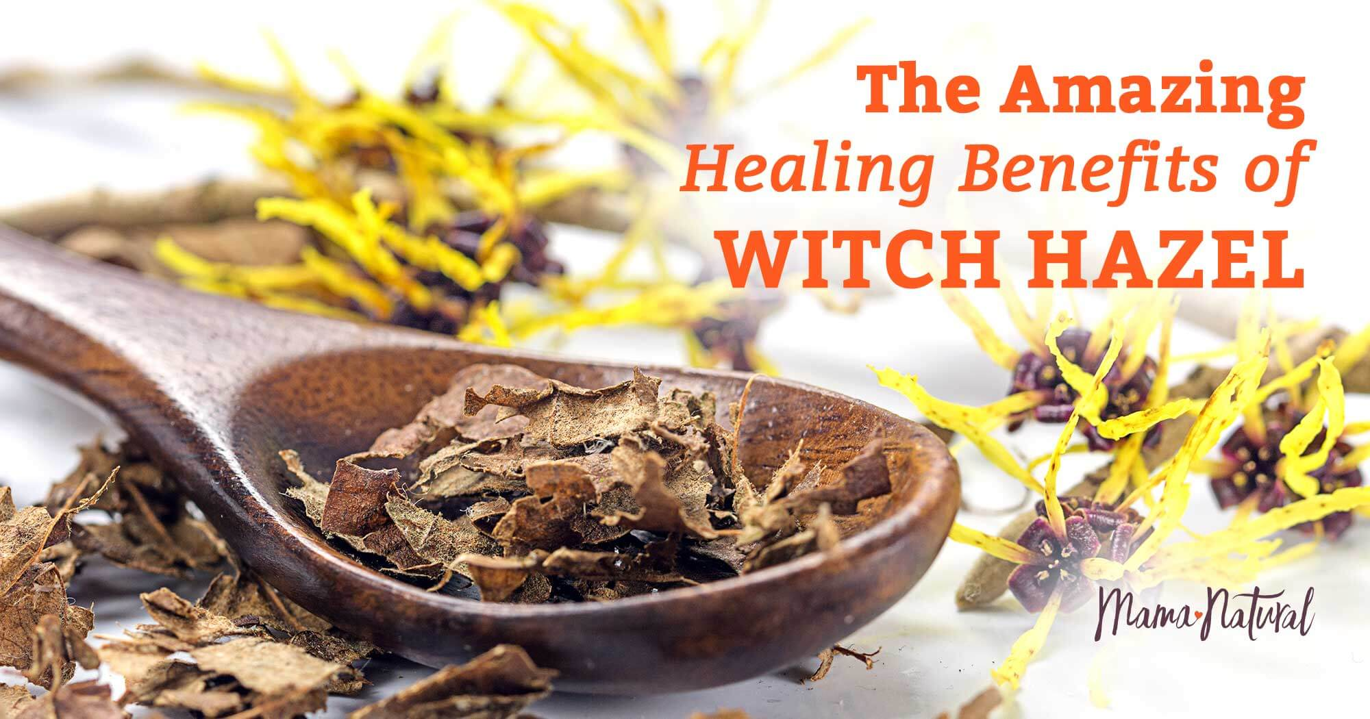 Witch Hazel The Amazing Healing Benefits Of This Plant